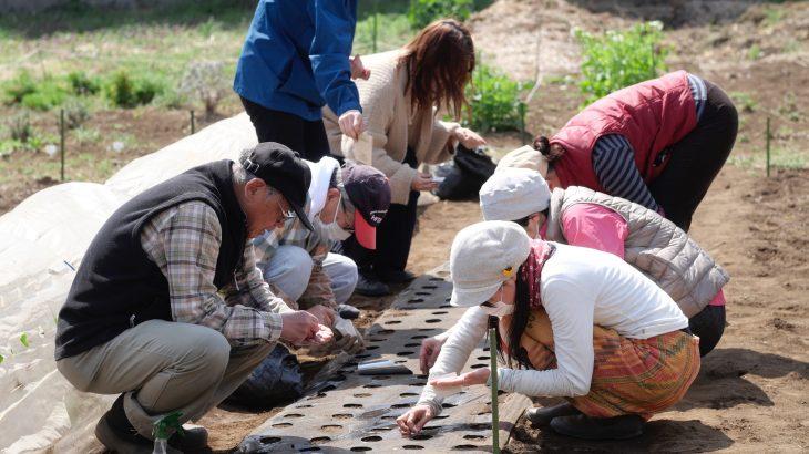 「農」でまちを育てよう〜みんなの畑〜(西東京市・ノウマチ)