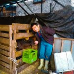 【小泉牧場・練馬区】23区唯一の「三代目酪農屋さん」
